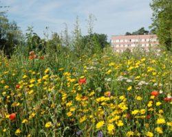 Naturnahe Gestaltung von Freiflächen gegen das Bienensterben