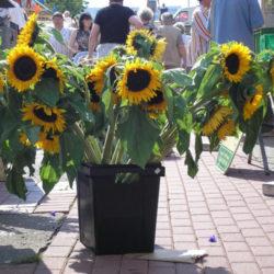 Blumenmarkt 2006