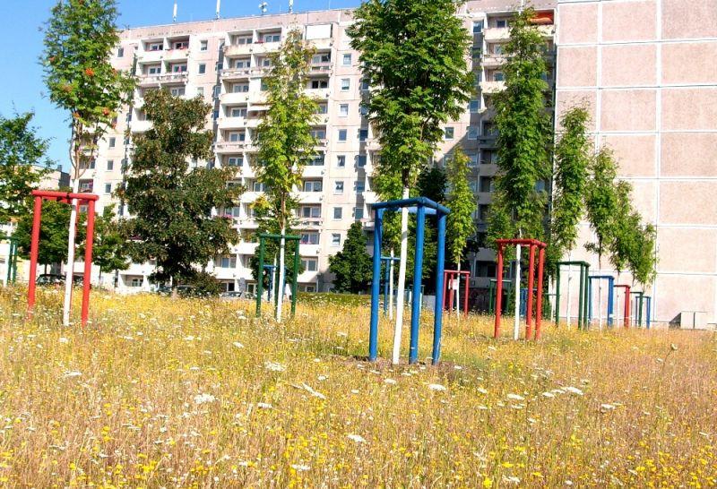 Erste Blütenwiesen sind auf Brachflächen im Mueßer Holz entstanden - hier eine Fläche an der Hamburger Allee